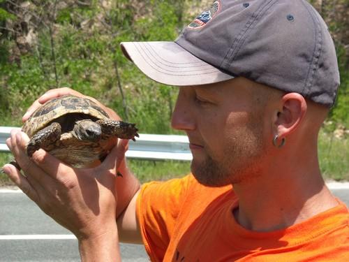 Bulharsko želva