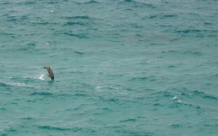 Dovadejici delfini